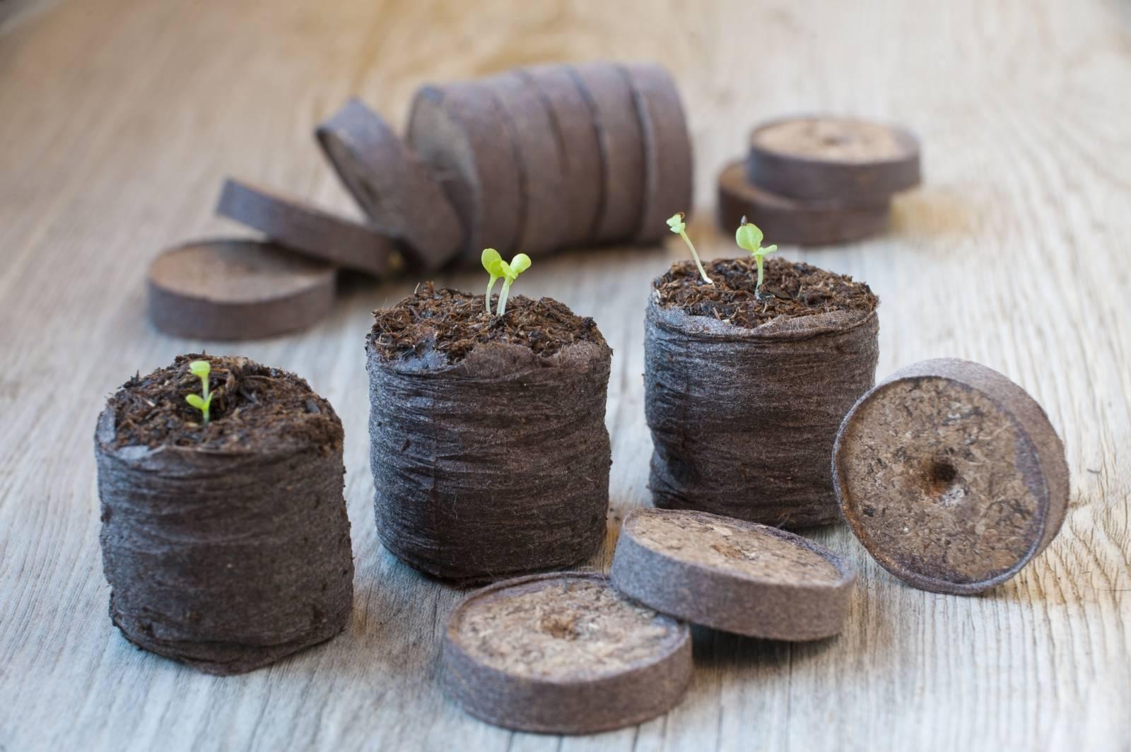 Кокосовый субстрат: применение для рассады и как приготовить
