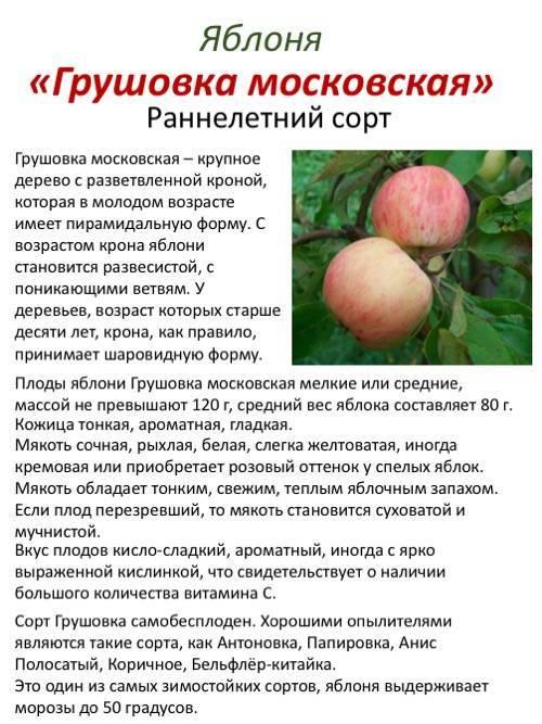 Сладкий, полезный и урожайный сорт миндаля виктория: описание и секреты выращивания