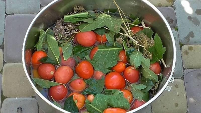 Квашеные зеленые помидоры. рецепт в банках, ведре, кастрюле, как бочковые, холодный засол на зиму с чесноком, зеленью, холодной водой, горчицей