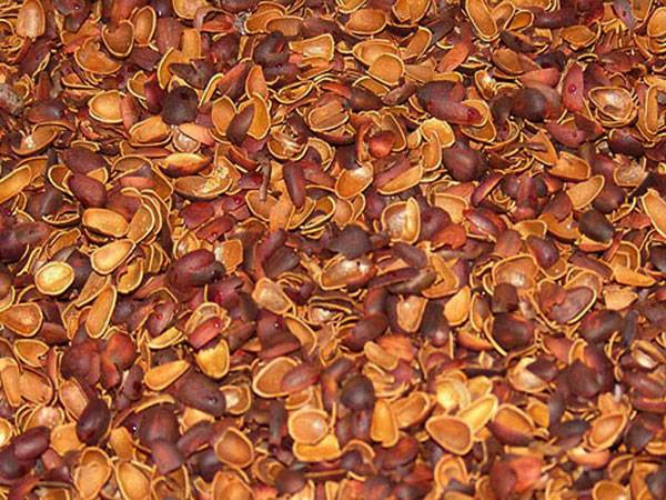 Лекарственные свойства и применение скорлупы кедрового ореха