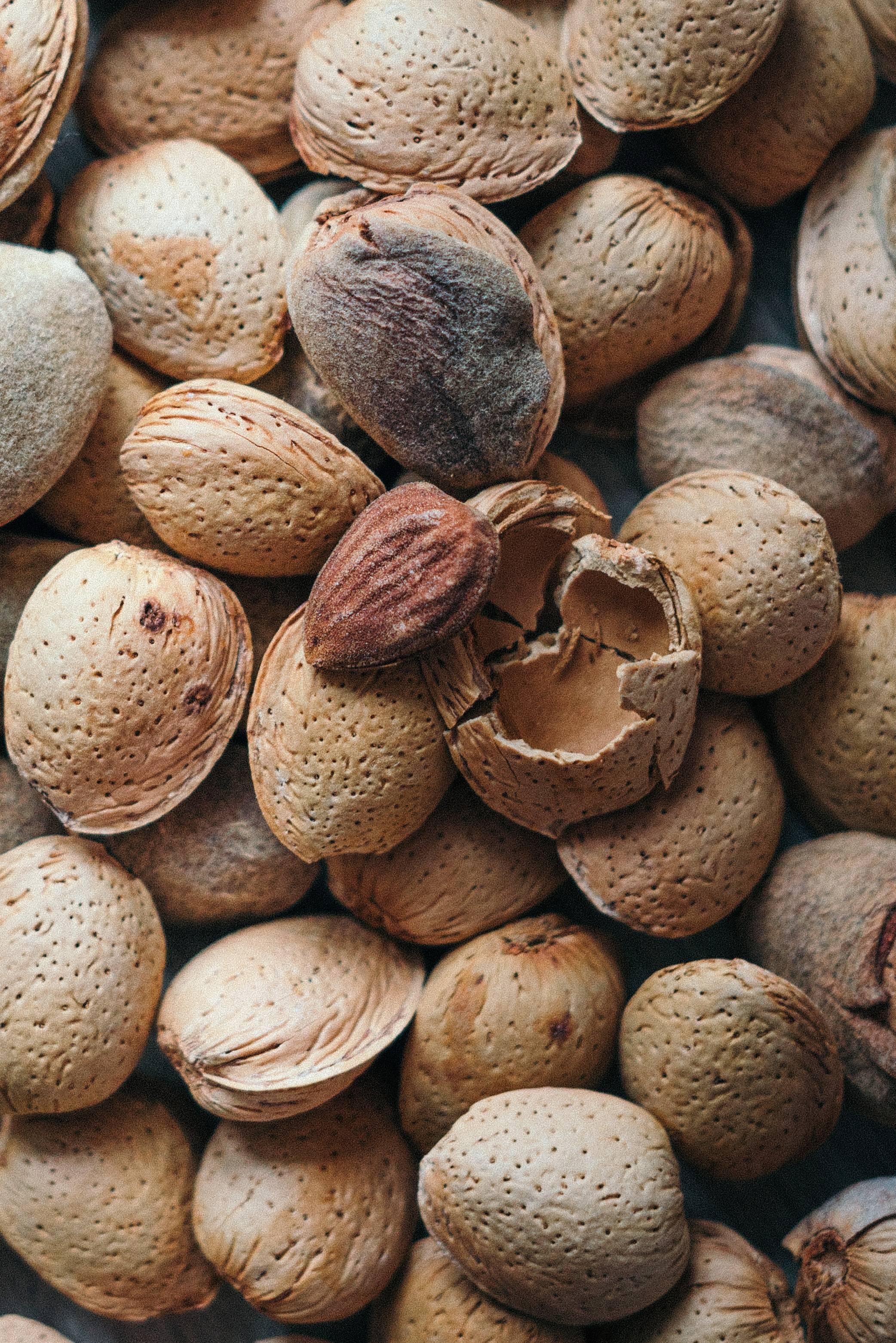 Виды орехов — 90 фото, описание, полезные свойства, посадка, уход и выращивание в домашних условиях