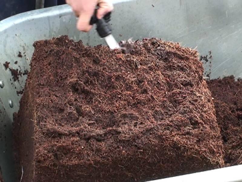 Кокосовый грунт: для каких растений подходит? / материал с волокнами для выращивания овощей