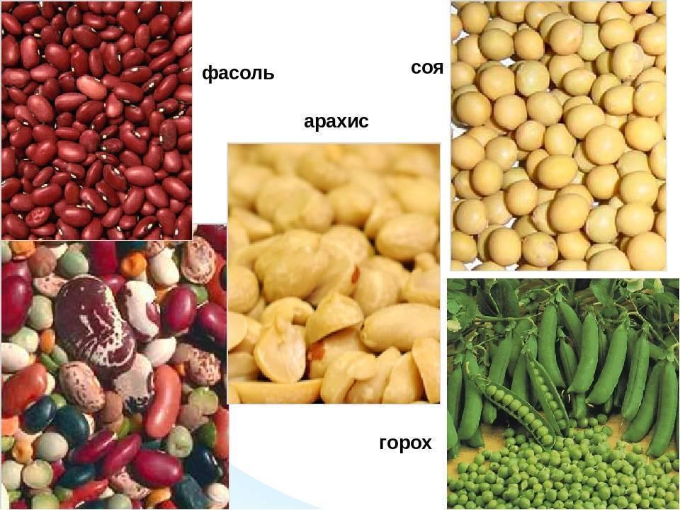 Арахис — польза и вред для нашего организма, калорийность и способы приготовления | здорова и красива