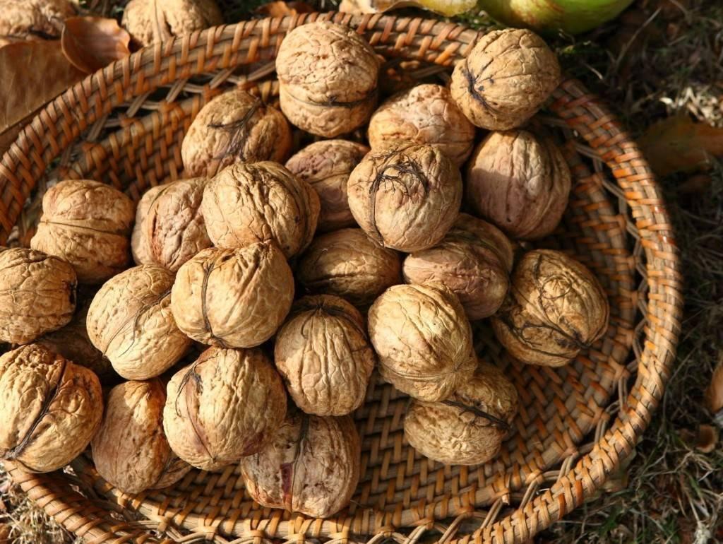 """Как не получить на выращивании грецкого ореха? кейс от фх """"ковчег"""