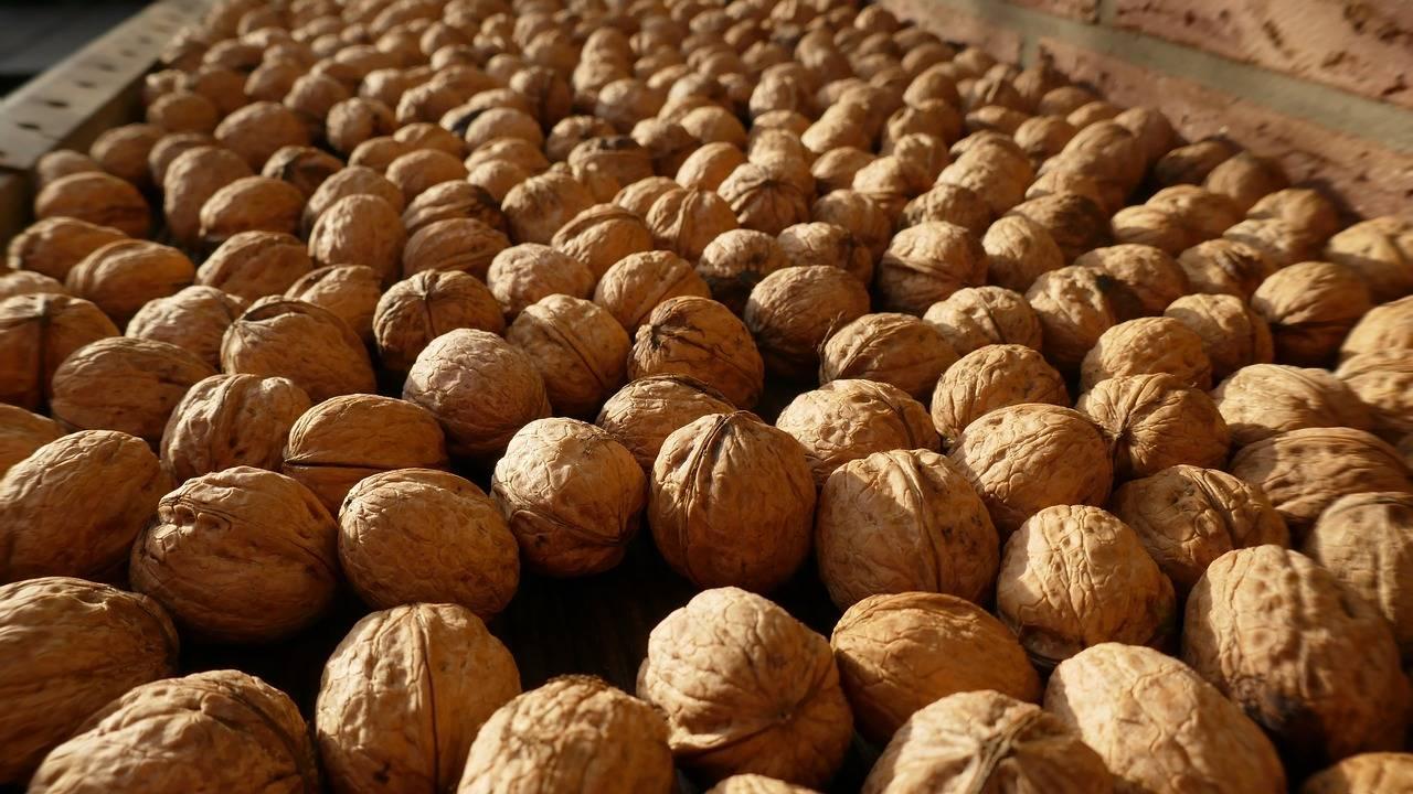 Отчет usda по рынку грецкого ореха в индии, 2017 г — портал ореховод
