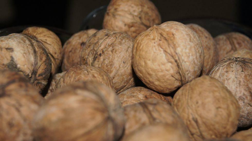 Умирающий лес. урожай орехов в кыргызстане собирают без учета воспроизводства — портал ореховод