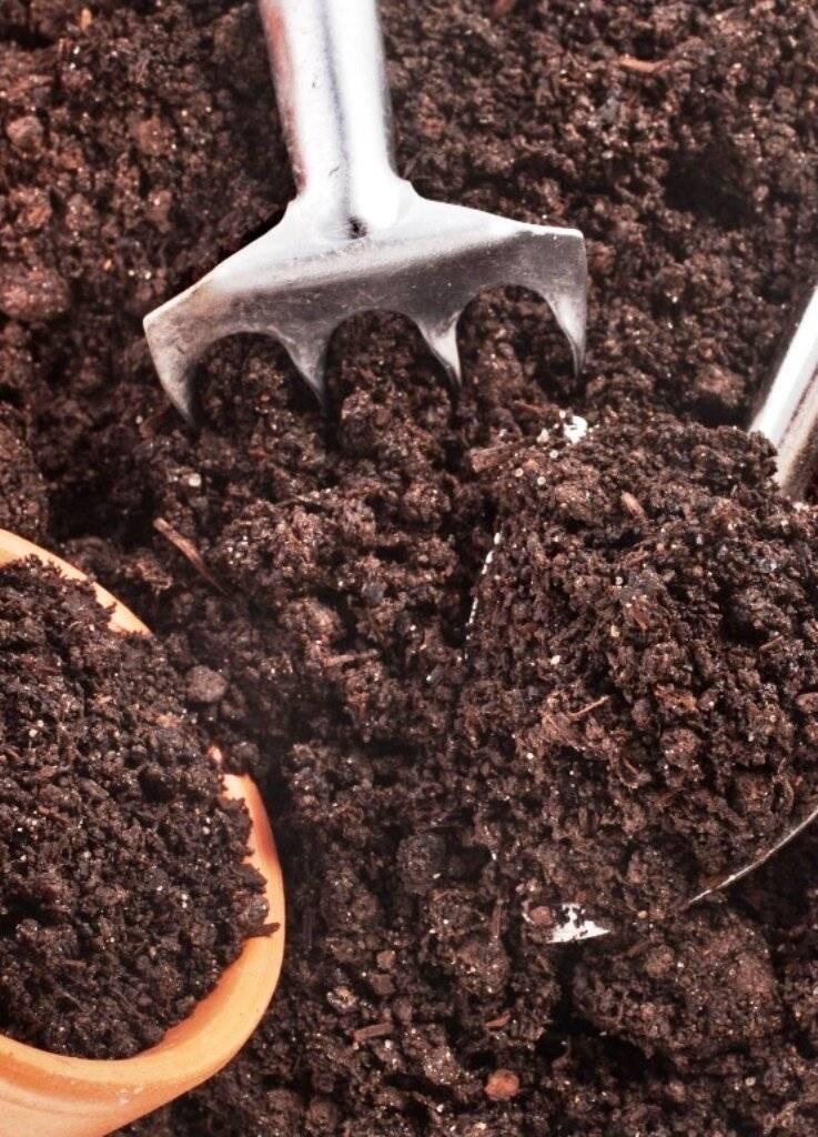Выращивание грецкого ореха на даче