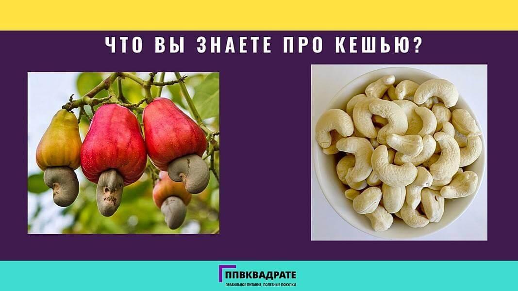 Орехи кешью: польза и вред, как выбрать, хранить, съесть