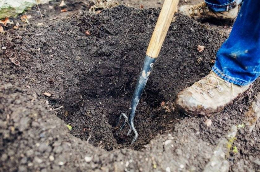 Подготовка почвы: как подготовить ее к посеву семян? как проводят рыхление для посадки культур весной? как происходит подготовка под цветники?