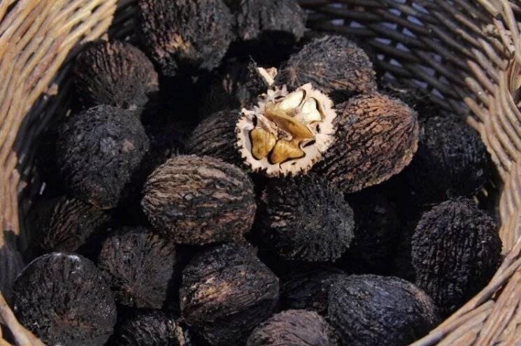 Лист чёрного ореха: применение и полезные свойства