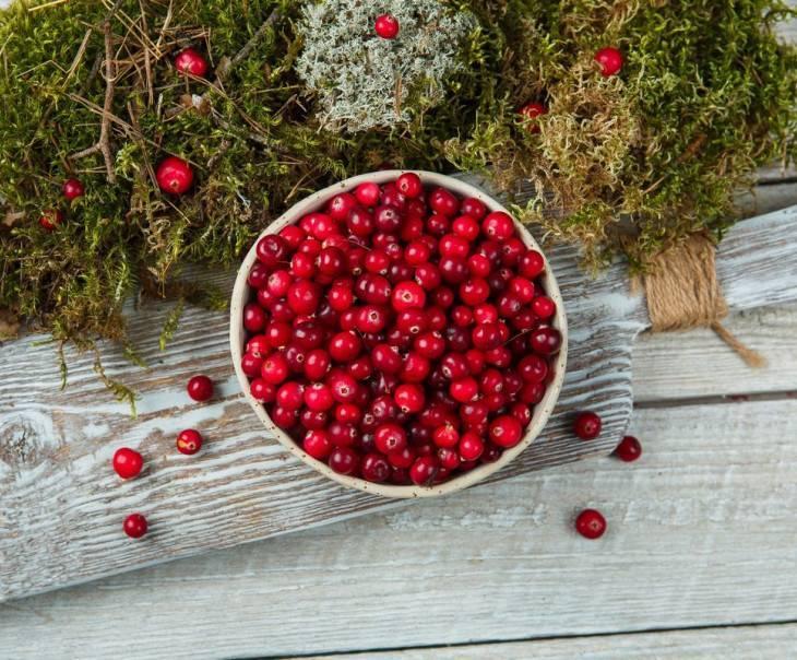 Ягода клюква: польза и вред для здоровья, лечебные свойства, секреты применения