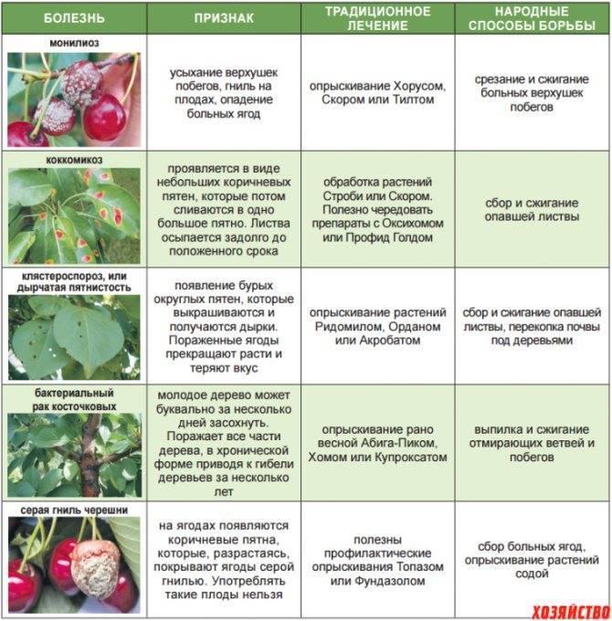 Миндаль делон: описание сорта, включая внешний вид, преимущества и недостатки, история появления, а также правила выращивания и сбор урожая