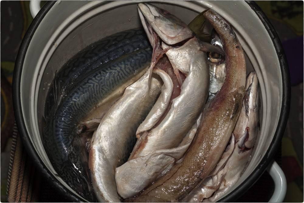 Как солить рыбу для сушки: правильно засолить, сколько длится засолка