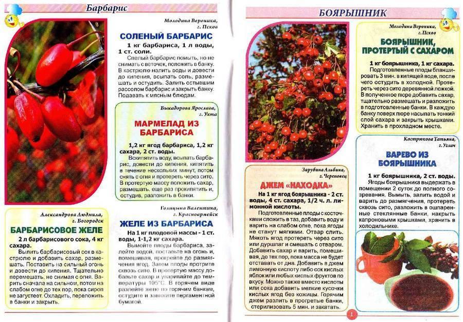 Ягоды барбариса натуральные. домашнее консервирование