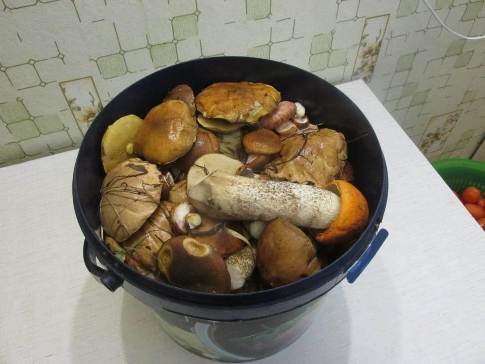 Советы грибников: как выбрать грибы для засолки и 2 способа засолки грибов