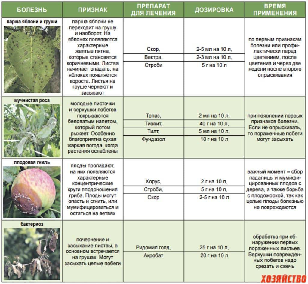 Миндаль плодовый никитский 62: описание сорта, характеристики, плюсы и минусы, правила выращивания, а также методы борьбы с вредителями и болезнями