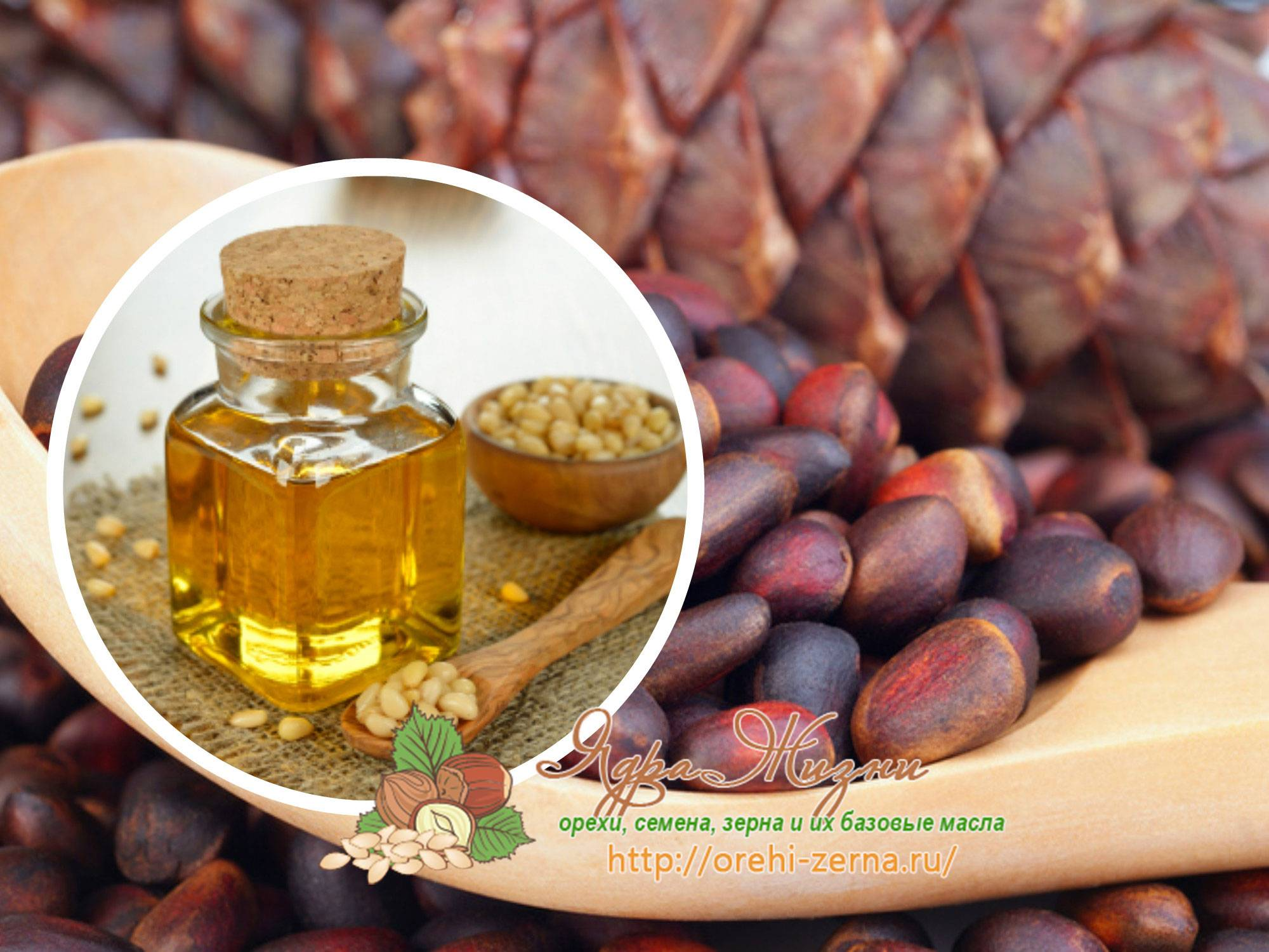 Кедровые орехи: ценность продукта, польза и вред для организма