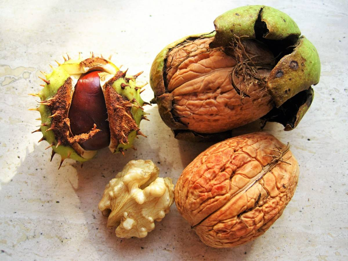 Орех макадамия – чем полезен и почему он сладкий на вкус - ppvkvadrate.ru