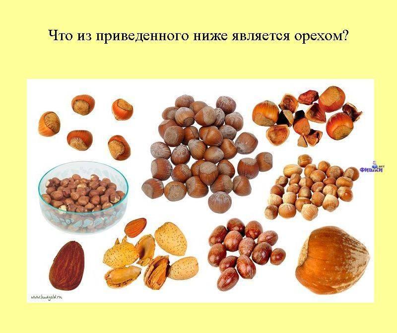 Обзор видов орехов