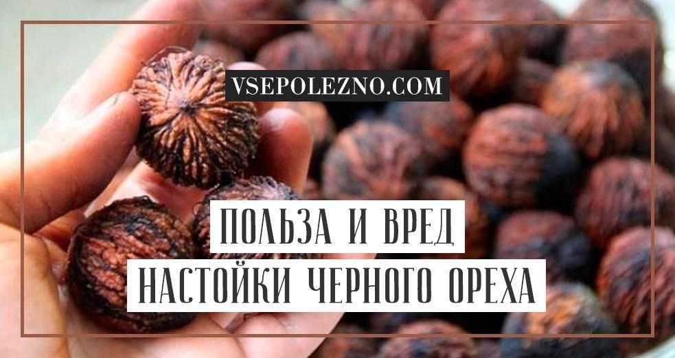 Черный орех: полезные свойства, противопоказания, отзывы
