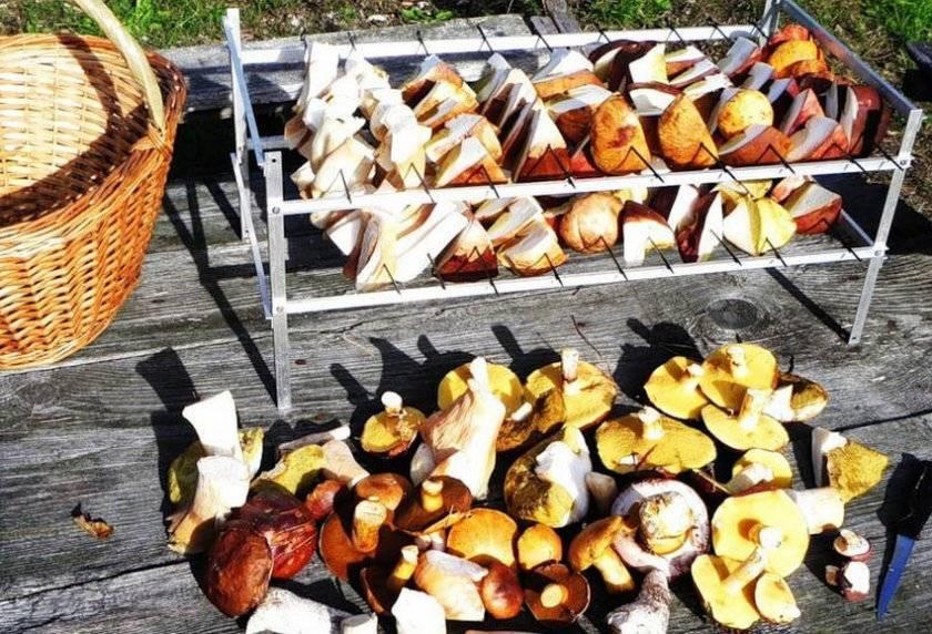 Как правильно сушить грибы в домашних условиях и что приготовить из сушеных грибов