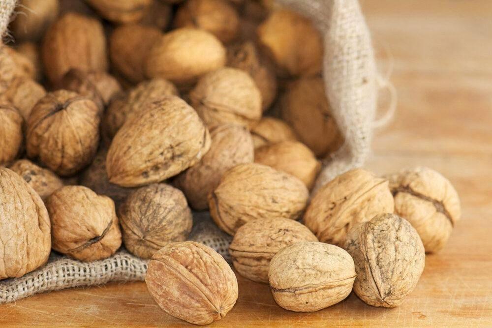 Скорлупа грецкого ореха: лечебные свойства и применение на дому