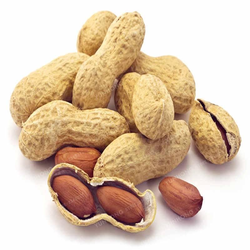 Полезные свойства и противопоказания арахиса