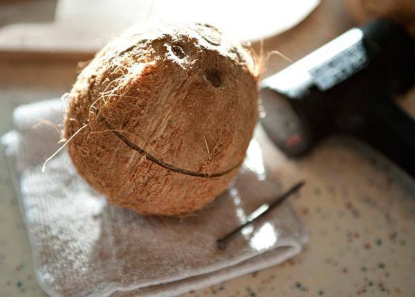 Как вырастить дома кокосовую пальму