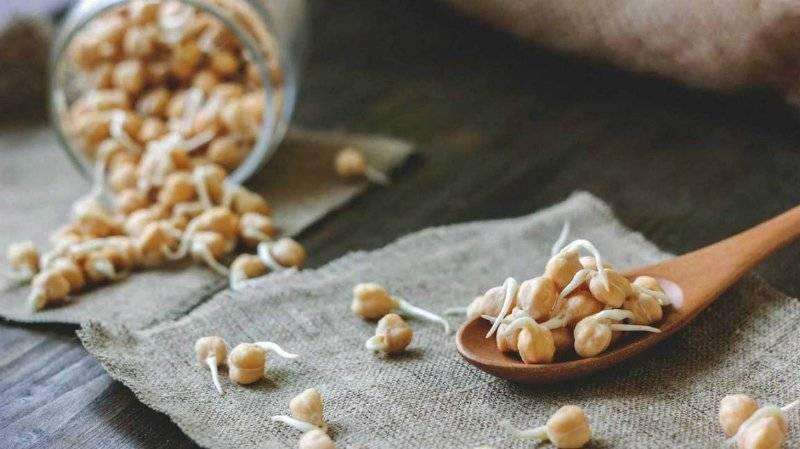 Ростки пшеницы: польза и вред, как прорастить и принимать