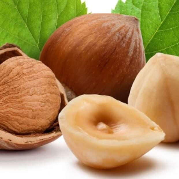 Фундук: польза и вред, фото, калорийность