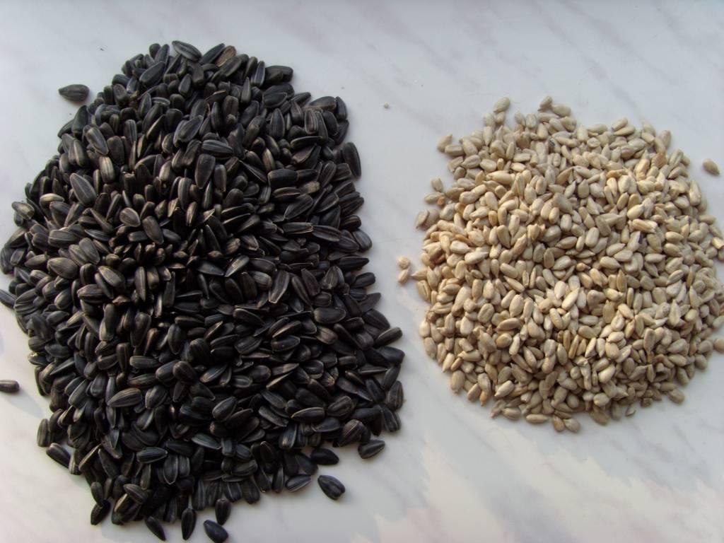 Полезны ли жареные семечки подсолнуха для организма женщин и мужчин