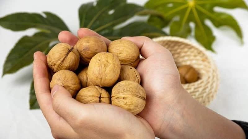 Орех макадамия: чем полезен и как выбрать