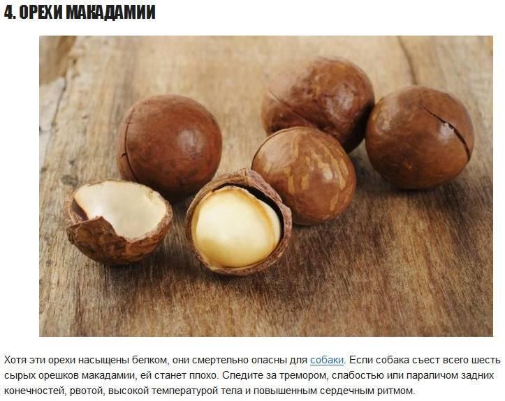 Орех макадамия: польза и вред для здоровья человека