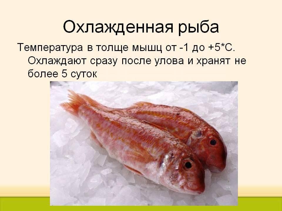 Глава iv. производство мороженой рыбы