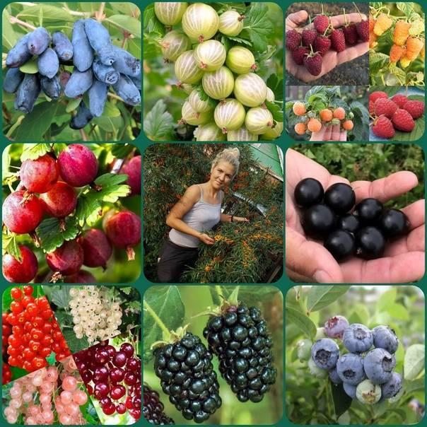Плодово-ягодные культуры и орехи