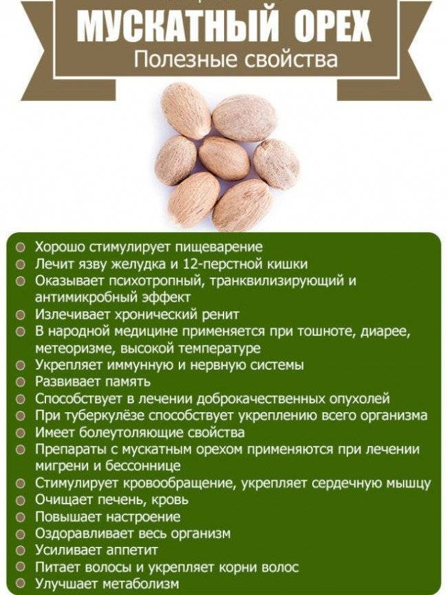 Полезные свойства и противопоказания мускатного ореха medistok.ru - жизнь без болезней и лекарств