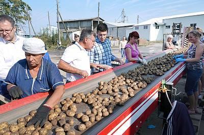 Выращивание грецкого ореха на украине как бизнес, урожайность грецкого ореха