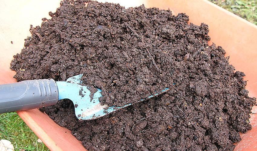 Шелуха от семечек как удобрение – способы, как применять в качестве подкормки