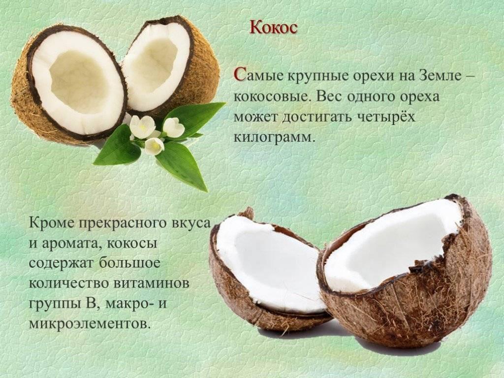 Всё о кокосе