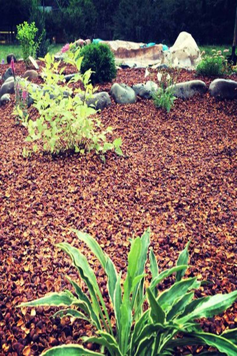 Яичная скорлупа — ваш незаменимый помощник на даче. удобрение. раскислитель почвы. способы использования. фото — ботаничка.ru