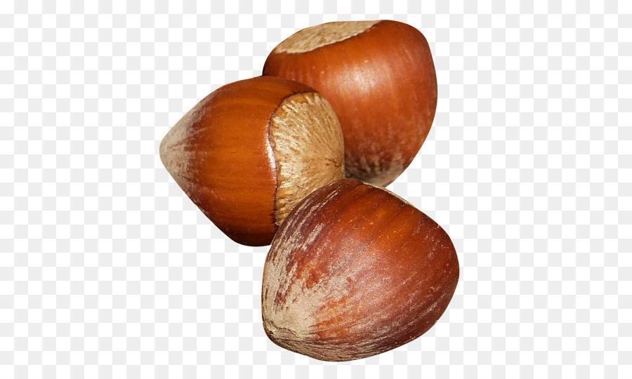 Фундук: польза и вред, калорийность, в чем секрет продукта? фундук – самый полезный продукт из семейства орехоплодных