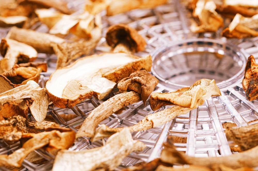 Как засушить грибы. как сушить грибы в домашних условиях