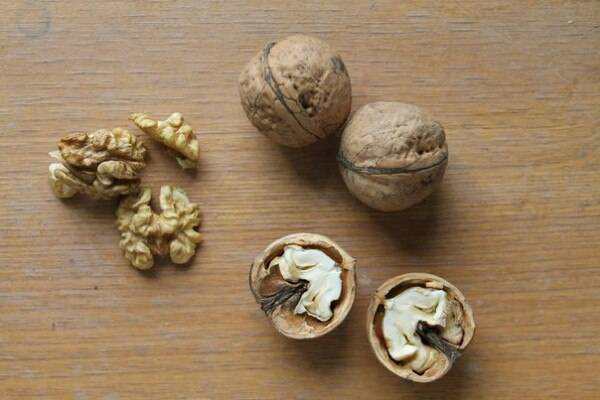 Сорта грецкого ореха для подмосковья – обзор наиболее популярных