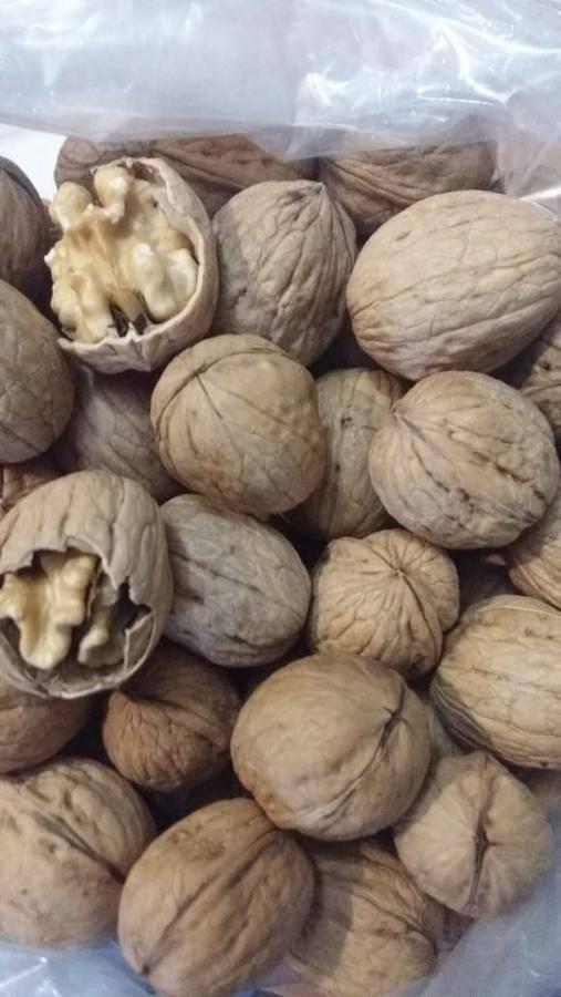 Авелланский орех: польза и вред чилийского ореха, рецепты