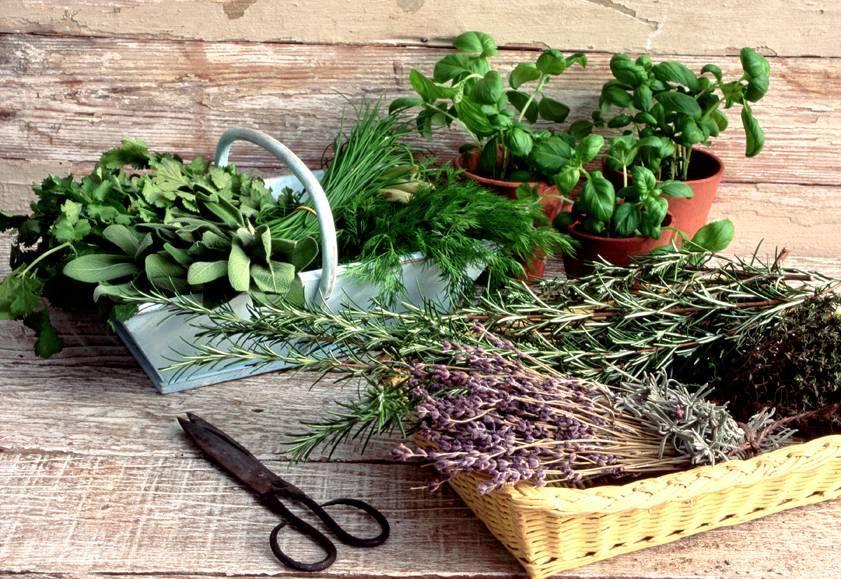 На чем можно настоять водку: травы, ягоды, пряности для аромата – как правильно пить