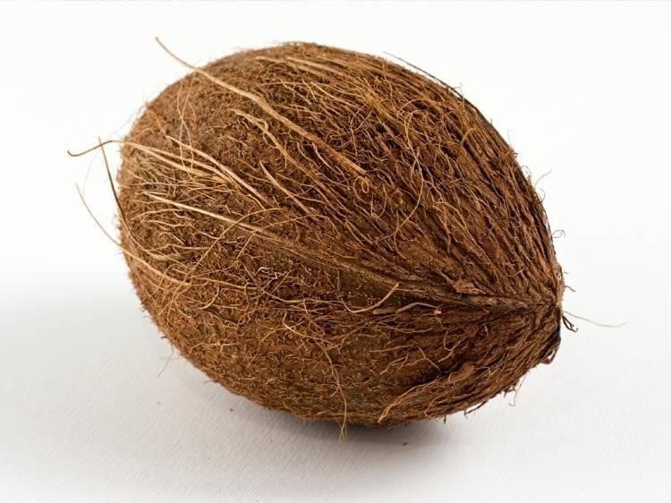 Кокос – это фрукт или орех?