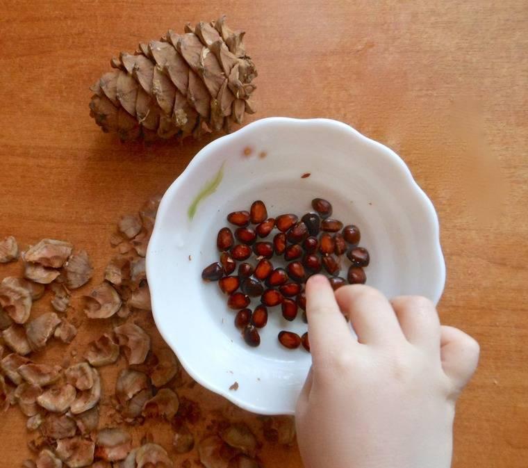 Как хранить кедровые орехи очищенные и в скорлупе