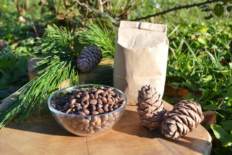 Снятся кедровые орехи и шишки — толкование сновидений