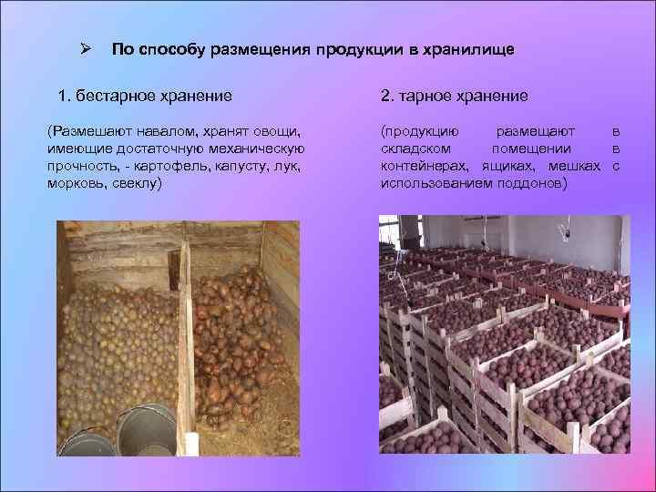 Современные  способы хранения плодов, овощей, ягод и винограда  |  аппяпм