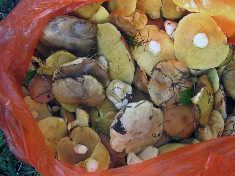 ᐉ засолить грибы в банках на зиму рецепты - godacha.ru